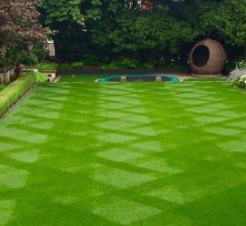 Đặc điểm và ứng dụng thảm cỏ bằng nhựa